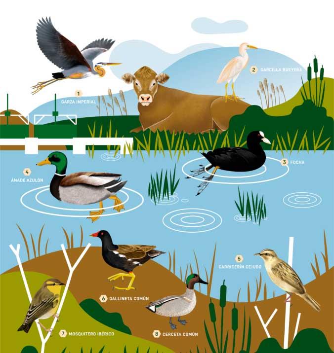 ¡Canta, vuela, vuela, como un pájaro! Día Mundial de las Aves migratorias 2021