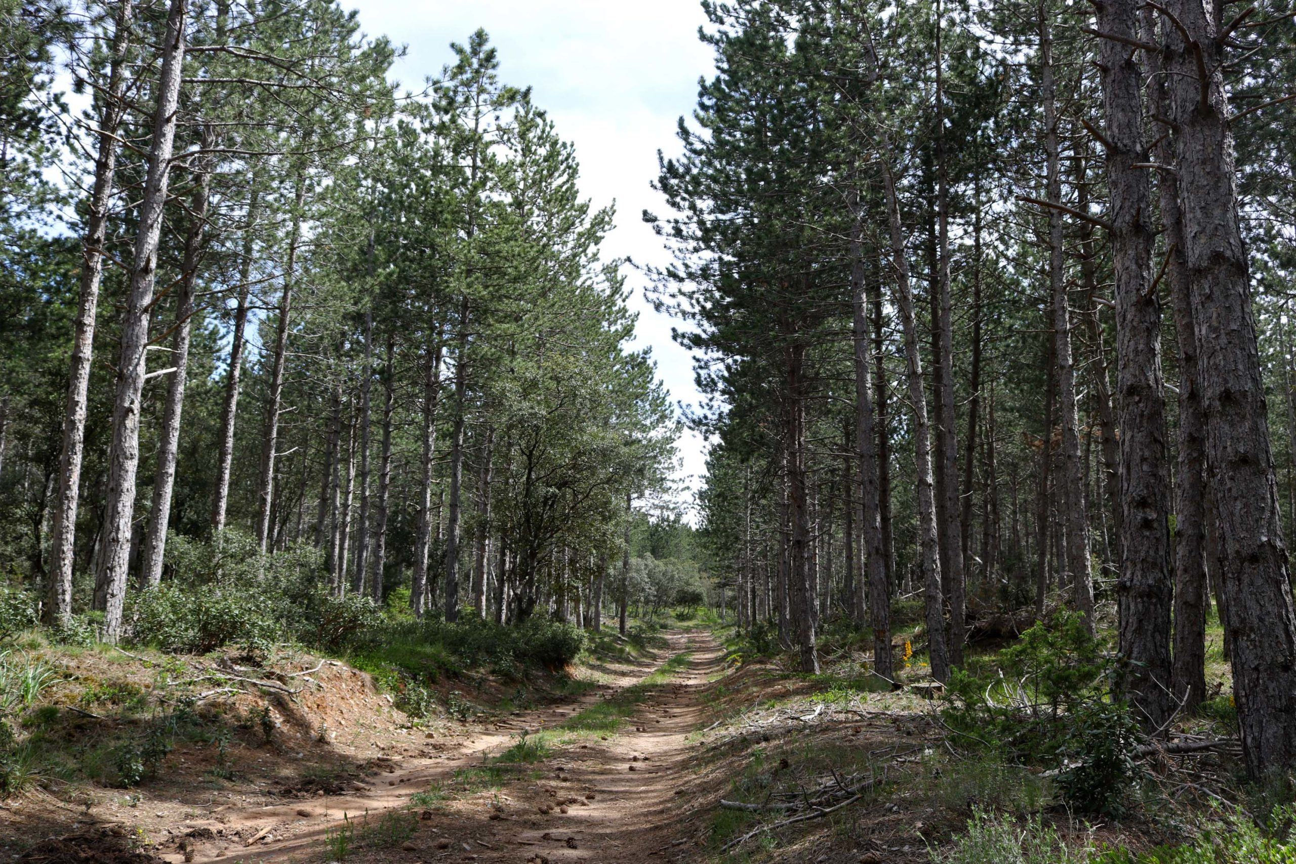 Simulando el daño que causará el cambio climático en los bosques