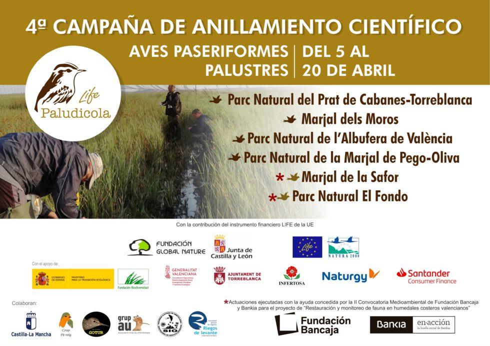Comienza la cuarta campaña prenupcial de anillamiento en los marjales valencianos
