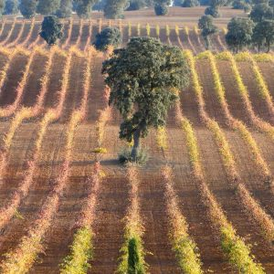 17. Infraestructuras eco biodiversidad en cultivos