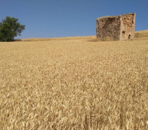 8. Estepas de La Mancha
