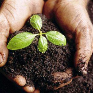 compostar_tierra_planta